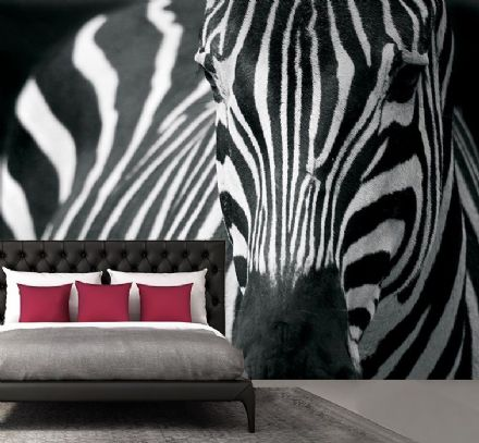Wild zebra black and white wall mural